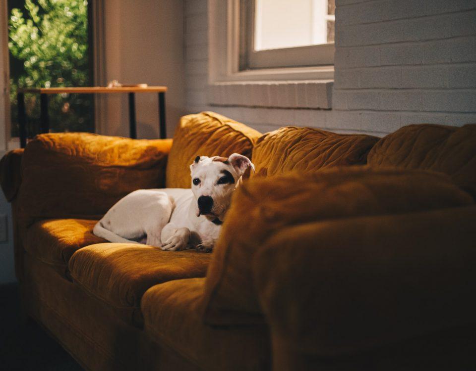 sprzątanie domu ze zwierzętami